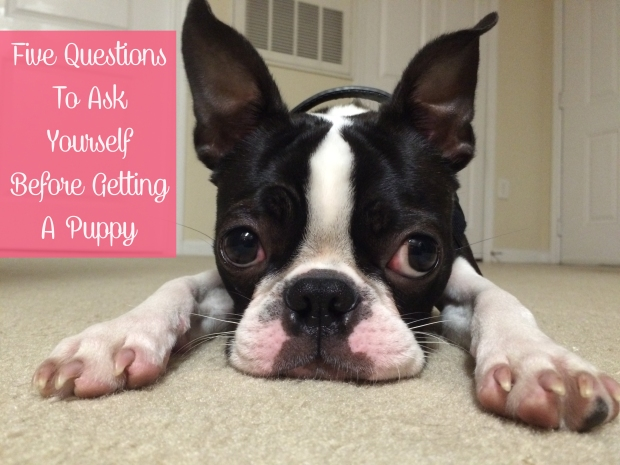 5 Questions to Ask Yourself Before Getting a Puppy