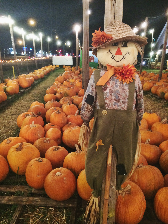 Pumpkin Patch Adventures - Some Shananagins
